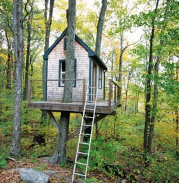 143_Tree-House-Ext-3